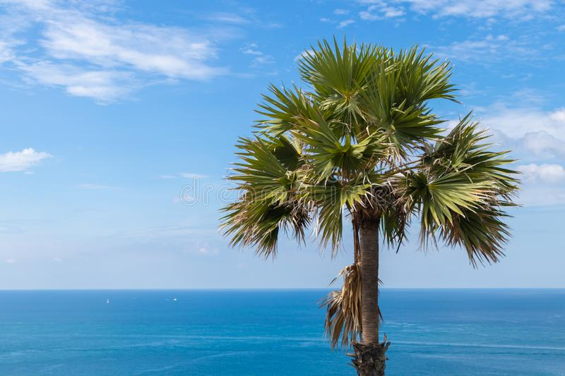 Sugar palm tree with beautiful sea view and sky background royalty free stock image