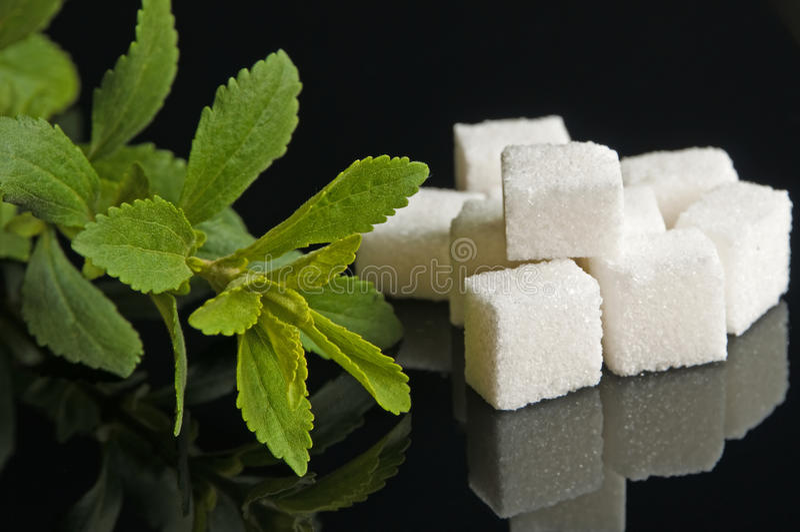 Stevia rebaudiana sweetener royalty free stock photo
