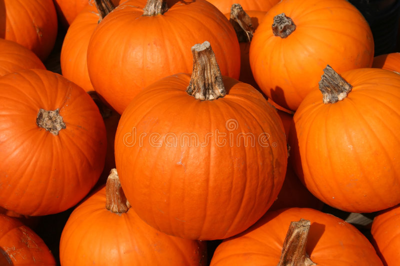 Sugar Pumpkins. Ready for Market are Displayed royalty free stock photos