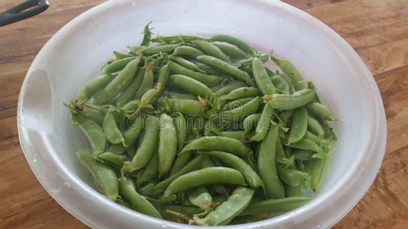 Sugar Snap Peas stock foto