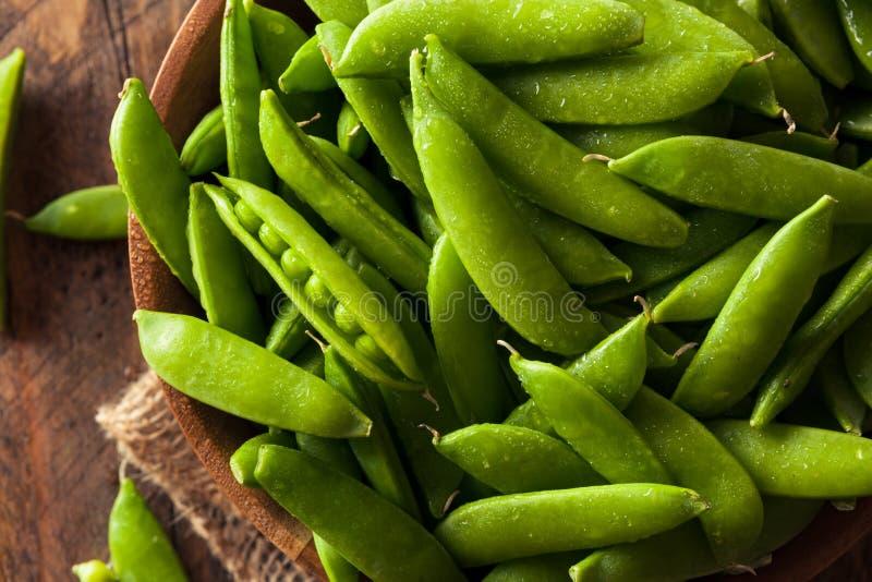Sugar Snap Peas verde orgânico imagens de stock royalty free