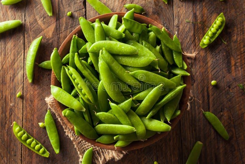 Sugar Snap Peas verde orgânico fotografia de stock royalty free