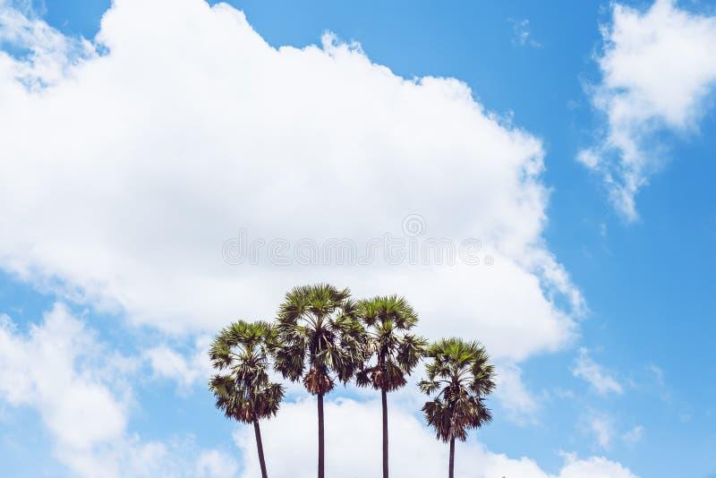 Sugar Tree e céu azul fotografia de stock