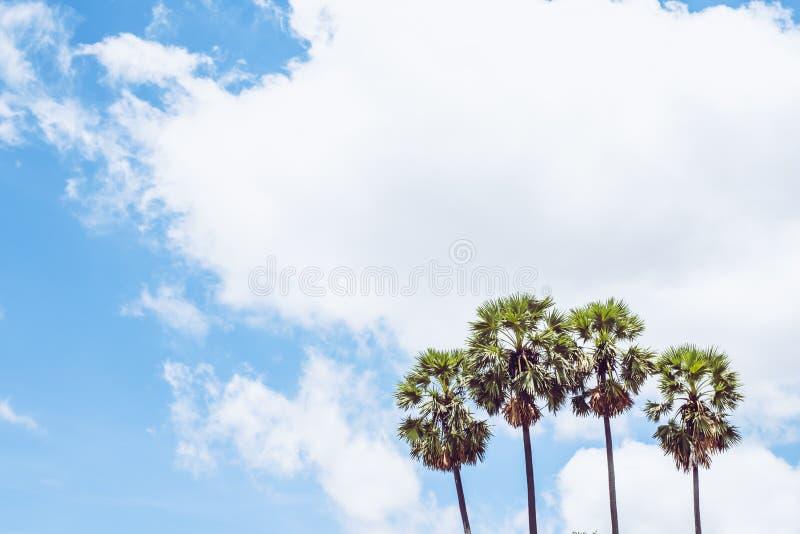 Sugar Tree e céu azul fotos de stock