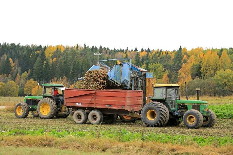 Sugarbeet żniwo w Październiku obrazy royalty free