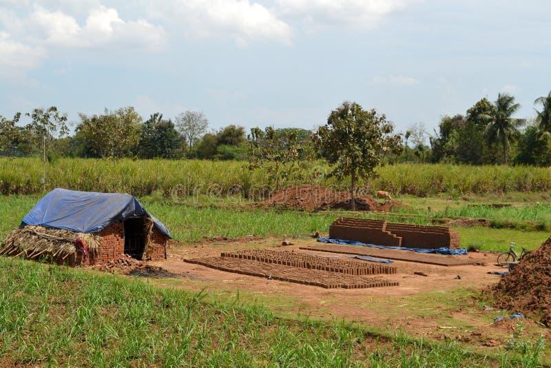 Sugarcan ziemia obrazy stock