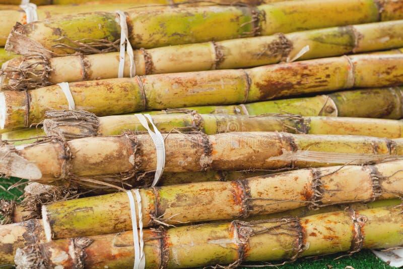 Sugarcane imagens de stock royalty free