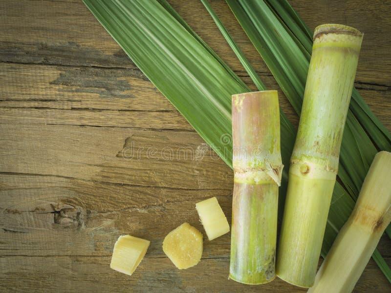 sugarcane photo stock