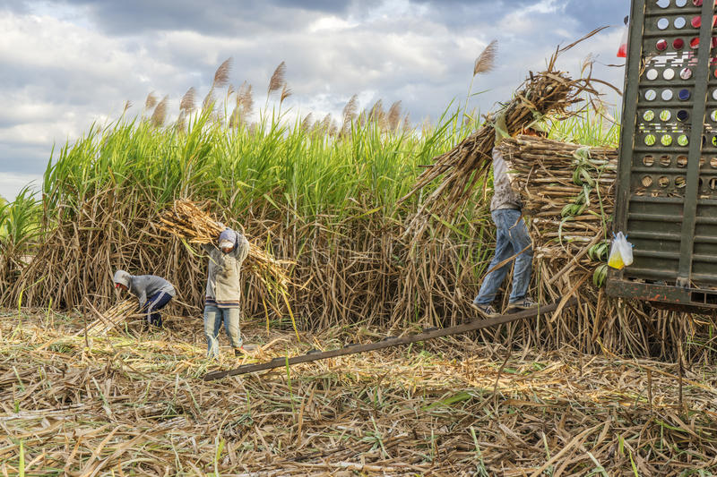 Sugarcane carried to wagon truck, Tay Ninh province, Vietnam stock images