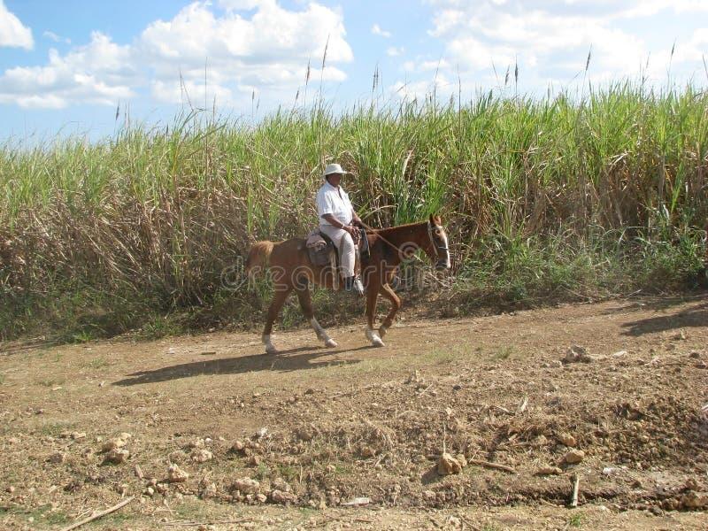 Sugarcane Plantation Editorial Photography