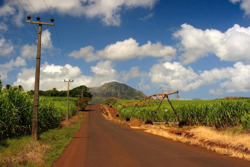 Sugarcane road stock photo