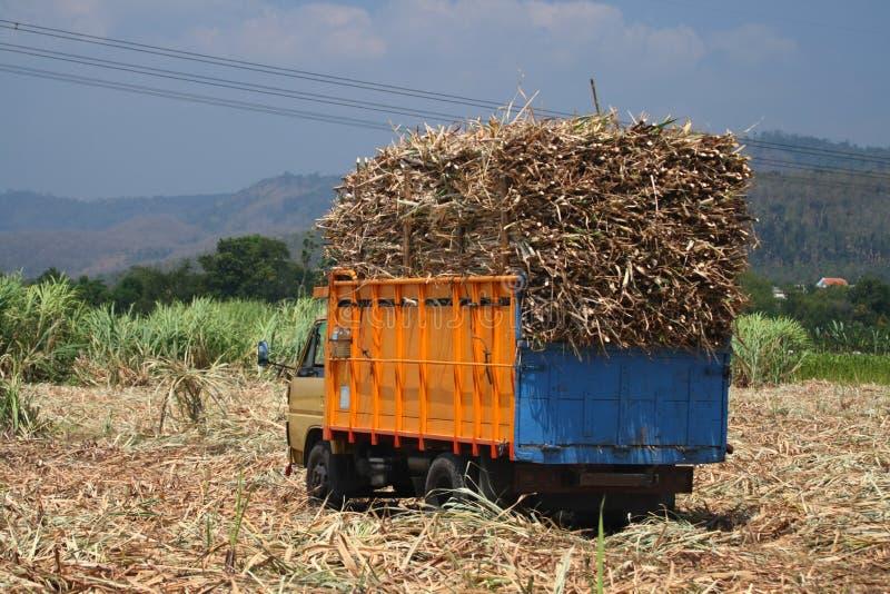 Sugarcane transportation stock images