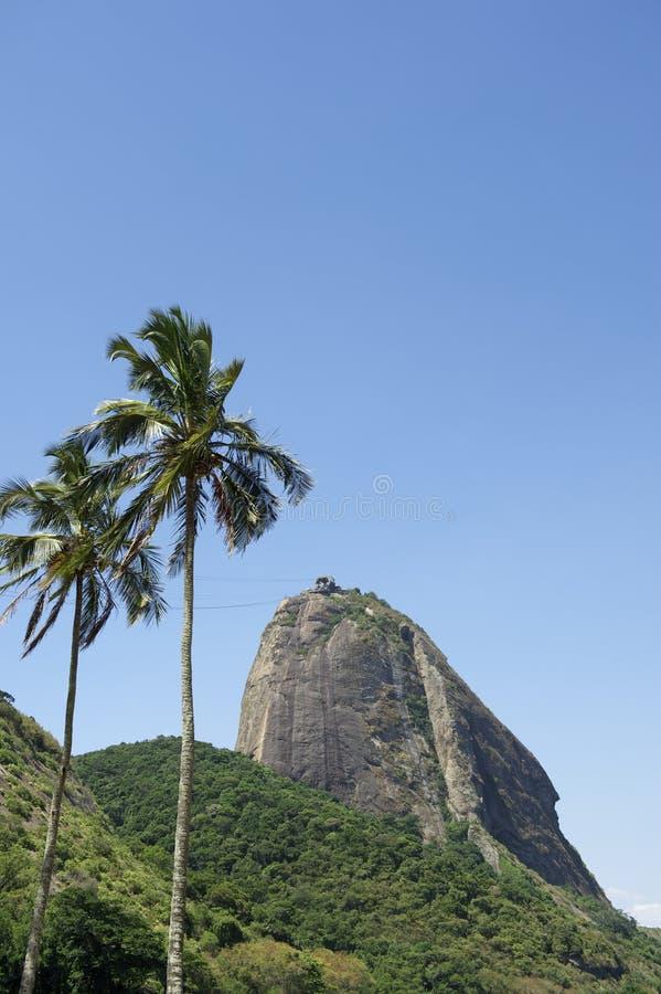 Sugarloaf berg Rio Brazil Palm Trees royaltyfria bilder