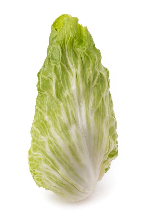Sugarloaf Kopfsalat stockbilder