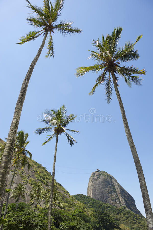 Sugarloaf Mountain Rio Brazil Palm Trees stock images