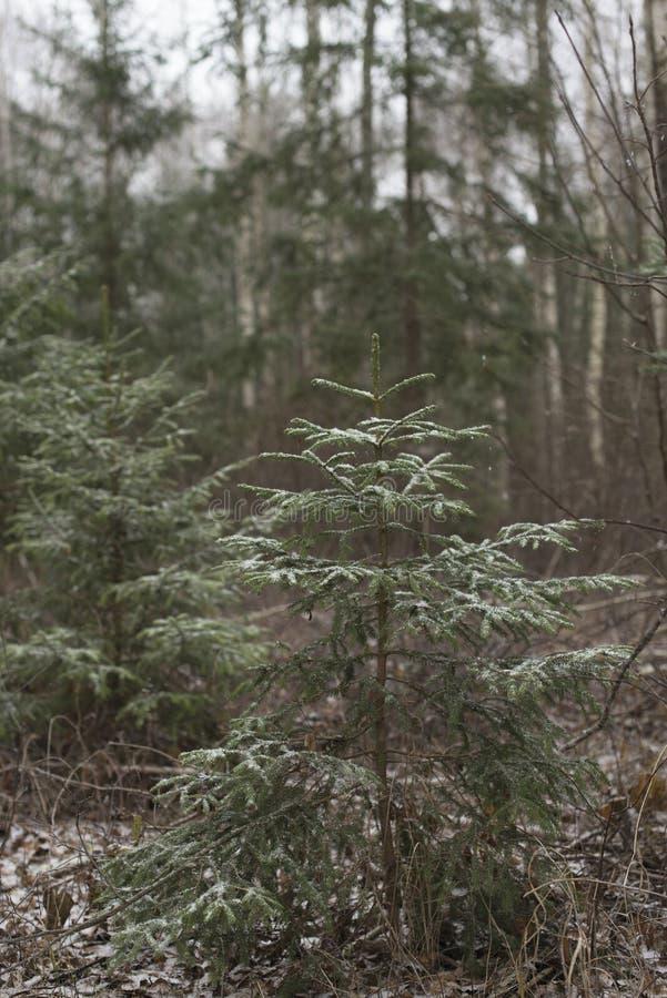Suger i skogen royaltyfria bilder