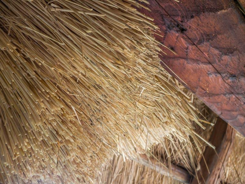 Sugrör halmtäcker på taket av ett gammalt hus arkivfoton