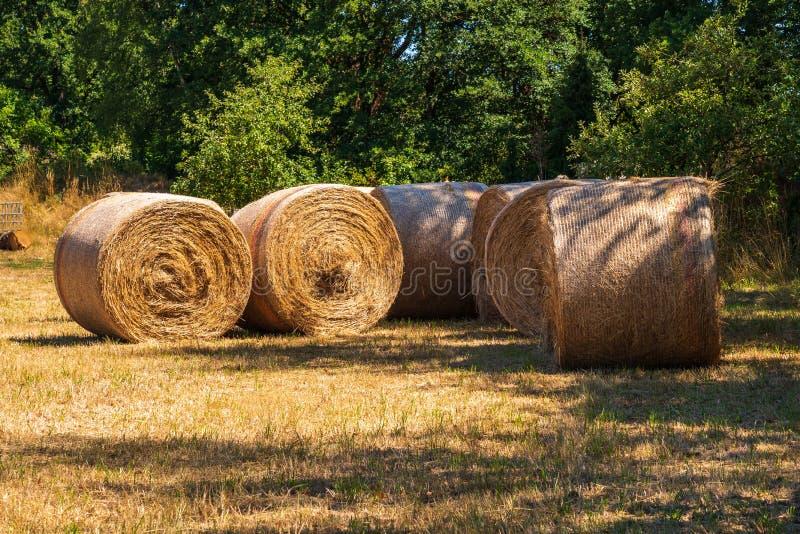Sugrör rullar på ett fält i sommar fotografering för bildbyråer