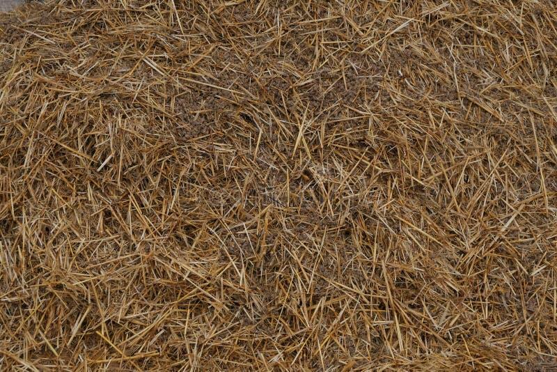 Sugrörbaler, höstack i en äng efter sommarskörd royaltyfri fotografi