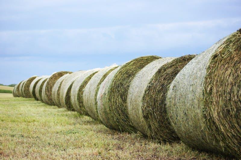 Sugrörbaler på fältet, åkerbrukt fält, skörd på fältet royaltyfria bilder
