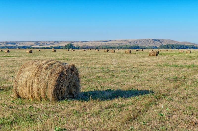 Sugrörbaler på jordbruksmark på solnedgången Höstackar lägger på gult fält i guld- ljus av inställningssolen Blå himmel, grönt li arkivfoto