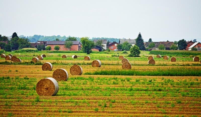 Sugrörbaler på Kroatien Europa för sommarfältZagreb ståndsmässig by royaltyfri fotografi