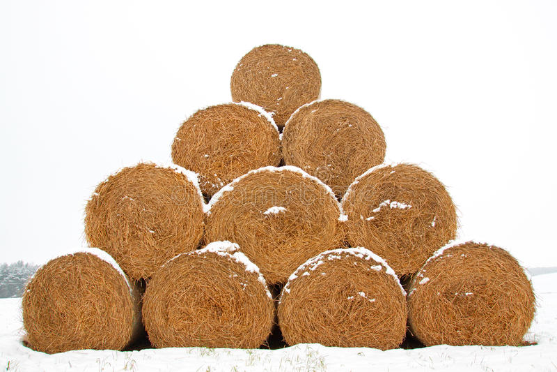 SugrörFodderbaler i vinter arkivbild