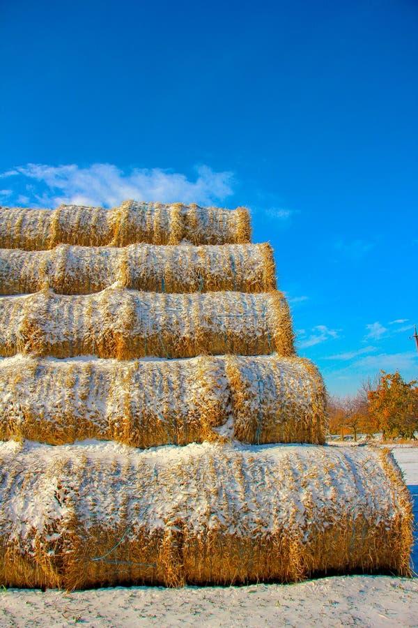 SugrörFodderbaler i vinter royaltyfria foton