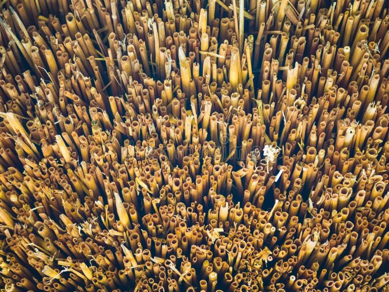 Sugrörtak och sugrör-som bakgrund arkivfoto