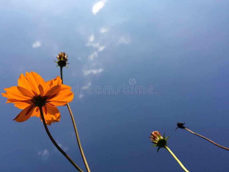 Sui bei fiori aumentanti immagine stock libera da diritti