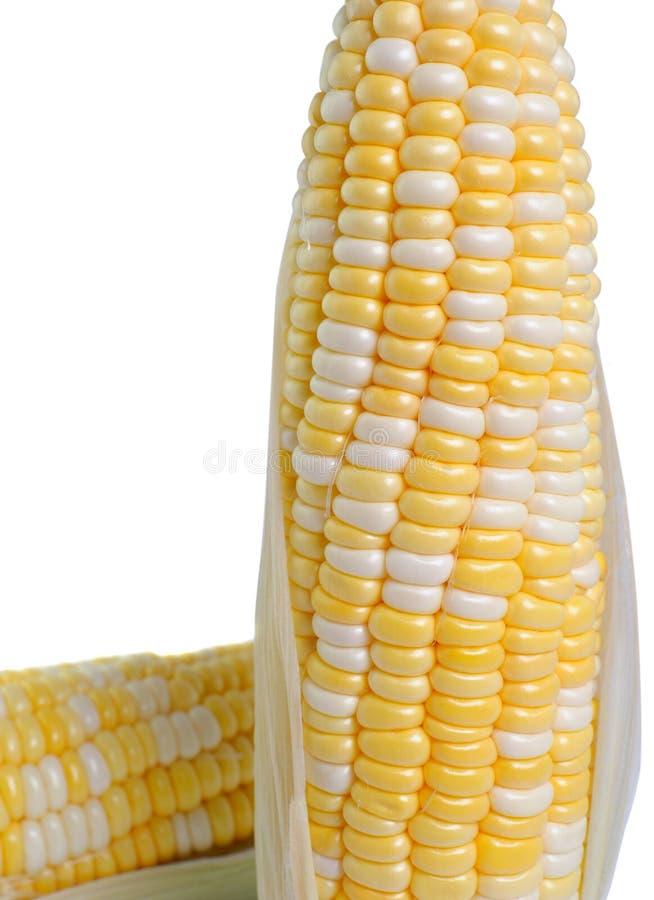 Suikermaïs op witte achtergrond royalty-vrije stock afbeelding