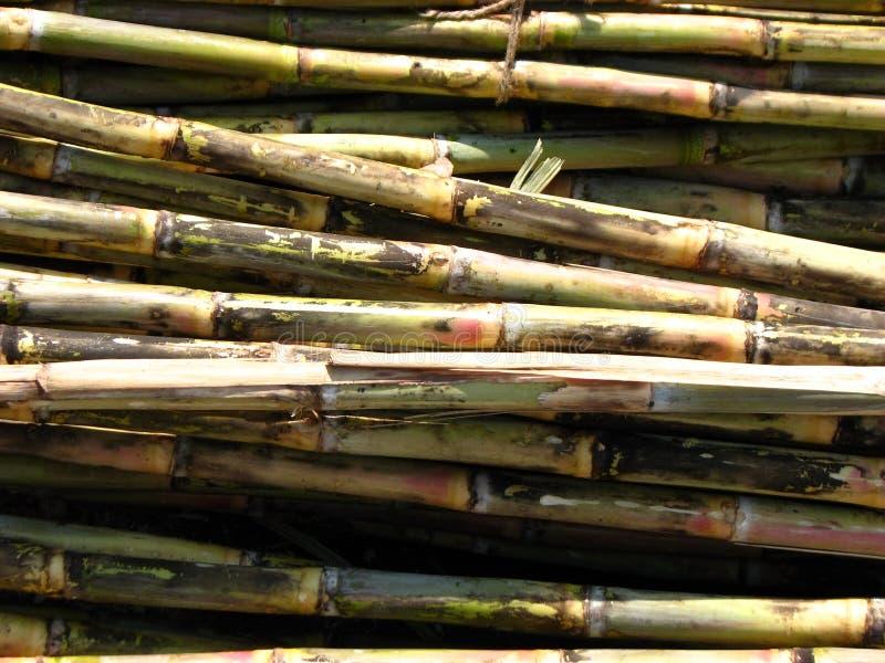 Suikerriet stock illustratie