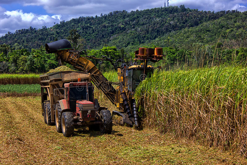 Suikerriet dat in Queensland, Australië bewerkt royalty-vrije stock foto