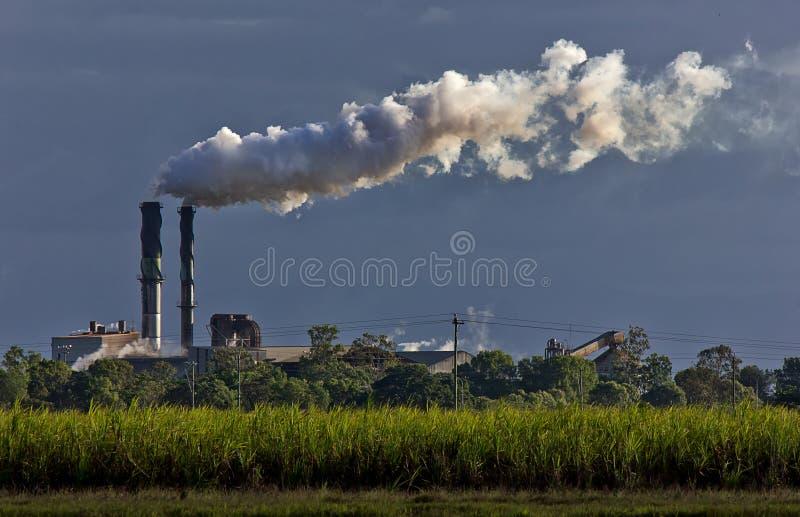 Suikerriet en raffinaderij stock foto's