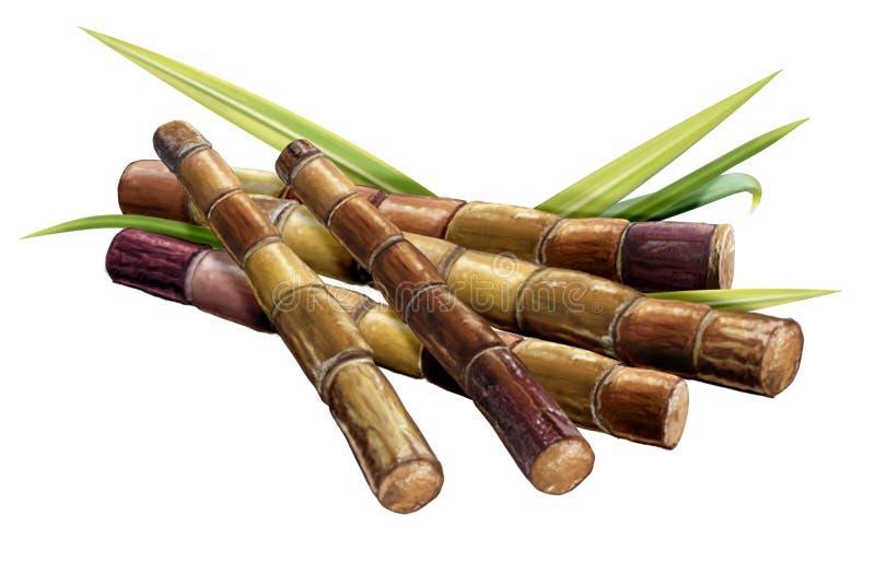 Suikerriet en riet stock illustratie