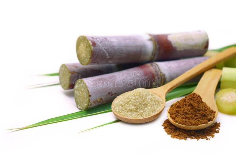 Suikerriet met bruine suiker stock foto's