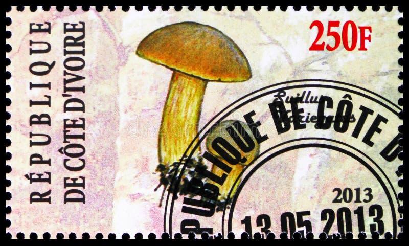 Suillusvariegatus, champinjonserie, circa 2013 arkivbild