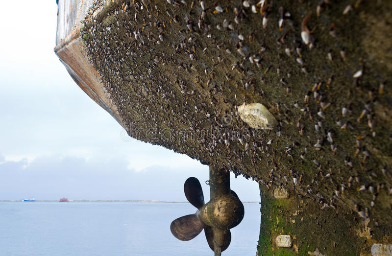 Sujar marinho fotografia de stock royalty free