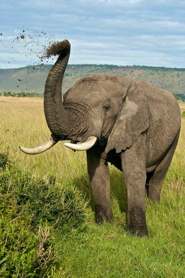 Sujeira de jogo do elefante africano imagem de stock