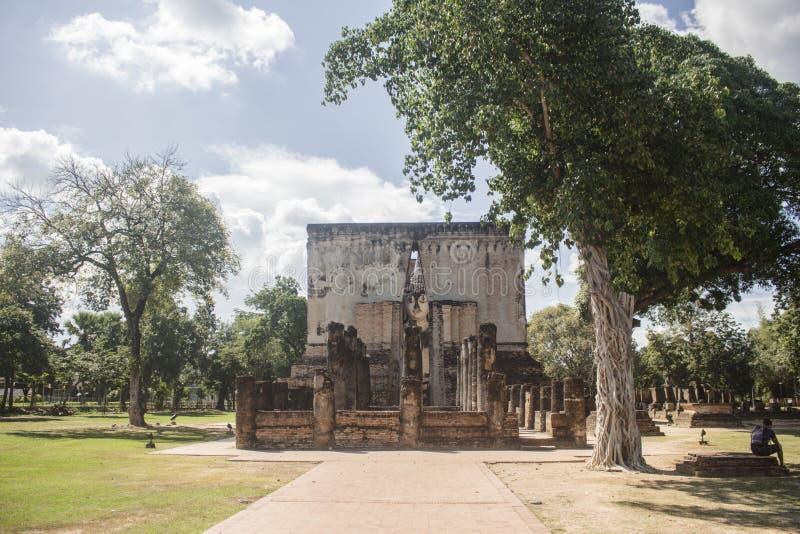Sukhothai, Таиланд - ноябрь 2017: Шикарное белое дерево рядом с виском приятеля Wat Si историческое sukhothai Таиланд парка стоковая фотография rf