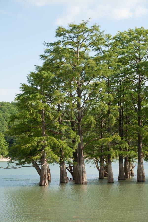 Sukko Озеро просто стоковое фото rf