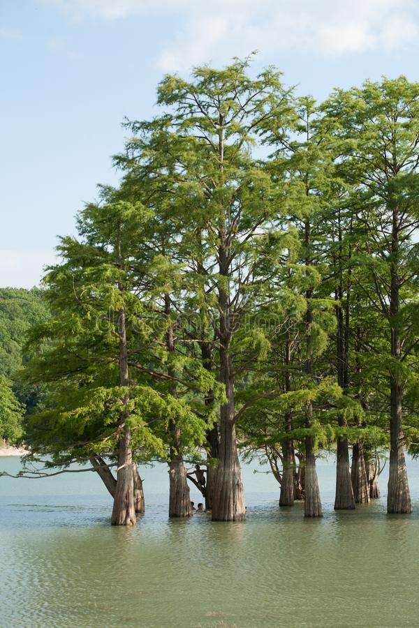 Sukko 湖 仅仅 免版税库存照片
