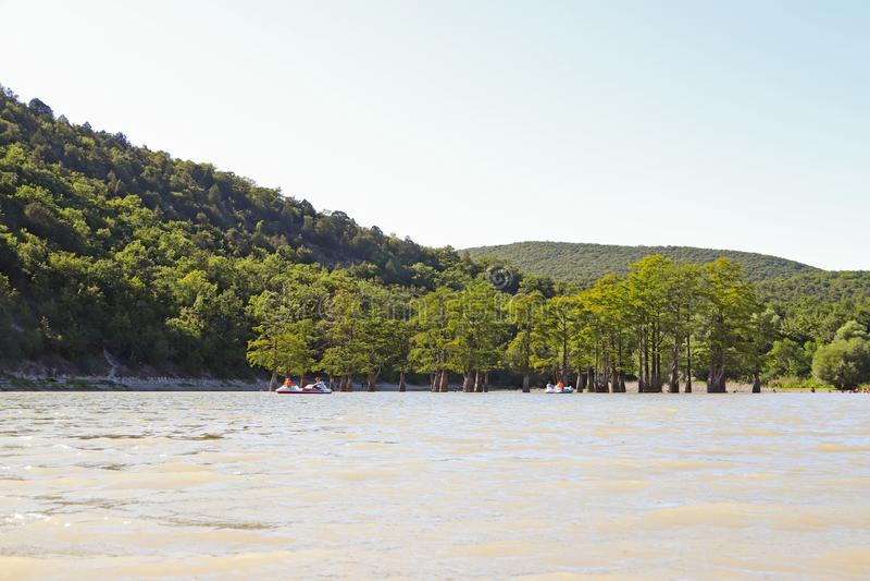 Sukko jezioro Krasnodar region Rosja Widok unikalny cyprys zdjęcia stock