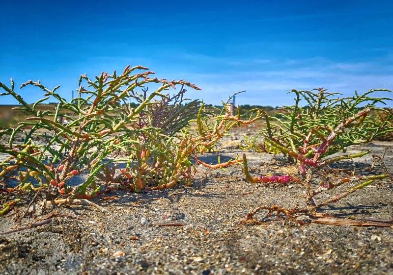 Sukkulenty na pustyni Roślina kaktusowa fotografia royalty free