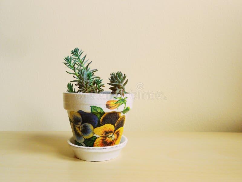 Sukulenty, dom rośliny, Decoupage zdjęcie stock
