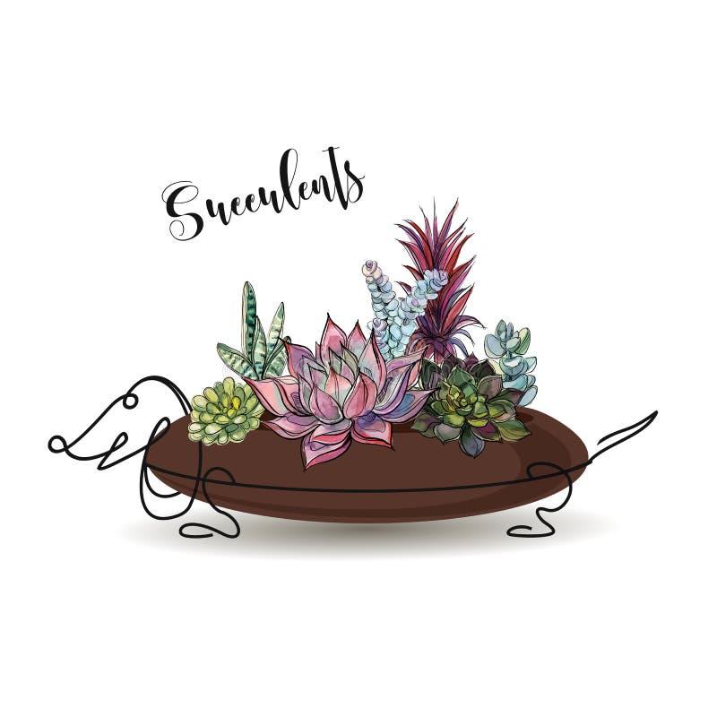 sukulenty Skład kwiaty w kwiatu garnku w postaci psiego jamnika grafit akwarela wektor royalty ilustracja