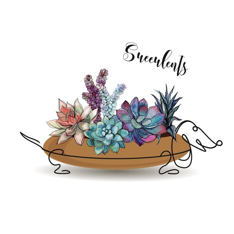 sukulenty Skład kwiaty w kwiatu garnku w postaci psiego jamnika grafit akwarela wektor ilustracji