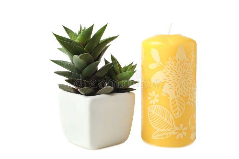 Sukulenty w białej świeczce i flowerpot obraz stock