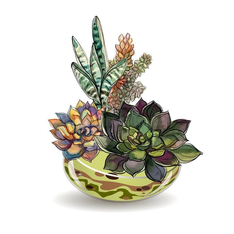Sukulenty w szklanych akwariach czarny piasek Kwiatów dekoracyjni składy grafit akwarela wektor ilustracja wektor