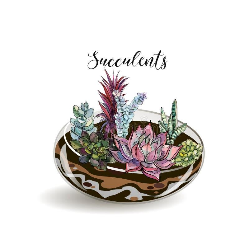 Sukulenty w szklanych akwariach Kwiatów dekoracyjni składy grafit akwarela wektor ilustracja wektor